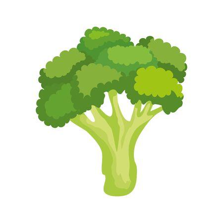 Brócoli fresco vegetal naturaleza icono diseño ilustración vectorial Ilustración de vector