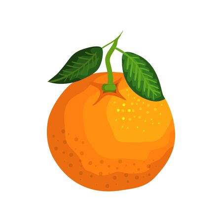 fresh orange fruit nature icon vector illustration design  イラスト・ベクター素材