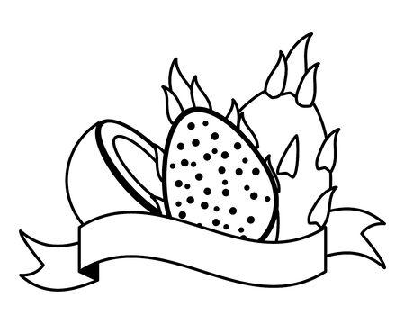 dragon fruit and coconut tropical fruits banner sticker vector illustration Illustration