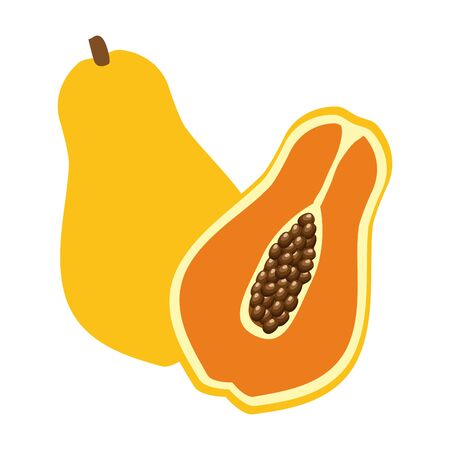 papaya tropical  vector illustration on white background