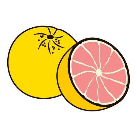 grapefruit tropical fruits vector illustration on white background