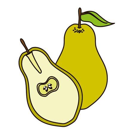pear tropical vector illustration on white background Иллюстрация