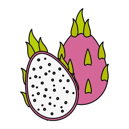 dragon fruit tropical fruits on wooden table vector illustration