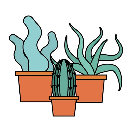 potted succulents and cactus decoration gardening flat design vector illustration