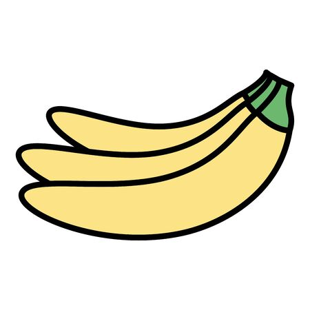 banana tropical fruits on white background vector illustration