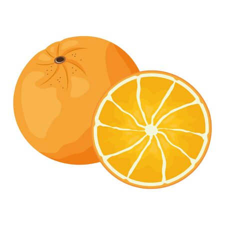 orange tropical fruits vector illustration on white background