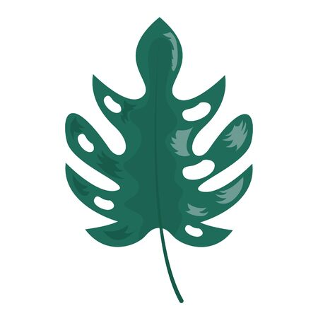 leaf monstera palm tropical foliage vector illustration 向量圖像