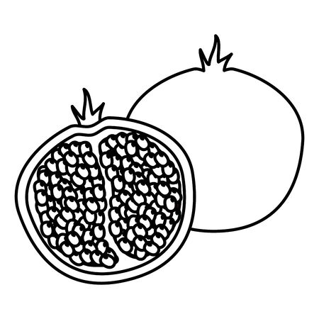 pomegranate tropical fruits vector illustration on white background Stock Illustratie