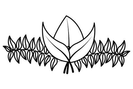 botanical leaf foliage arrangement on white background vector illustration Vector Illustration
