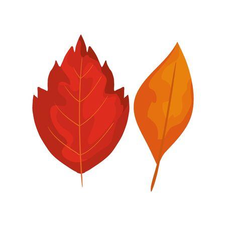 season autumn leafs isolated icon vector illustration design