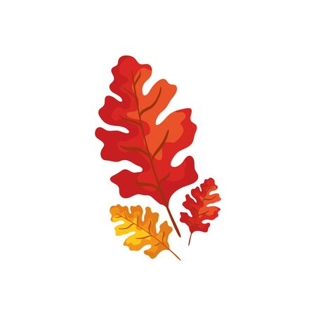 season autumn leafs isolated icon vector illustration design