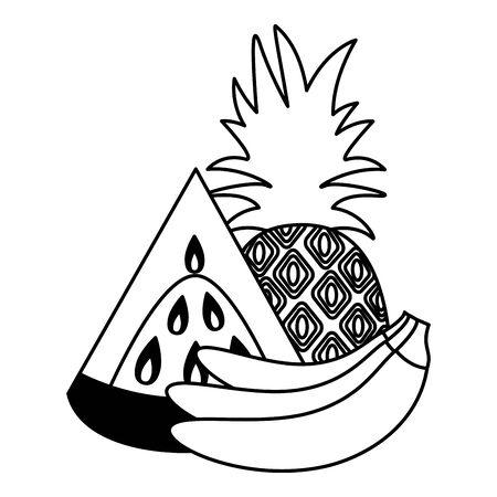 watermelon pineapple banana tropical fruits  illustration