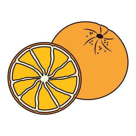 orange tropical fruits illustration on white background