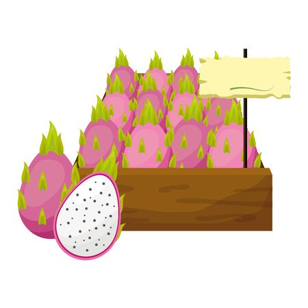 dragon fruit fresh tropical fruits in wooden box vector illustration