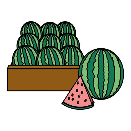watermelon fresh tropical fruits in wooden box vector illustration Illustration
