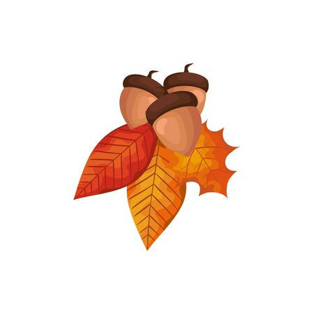 season autumn leafs with nuts isolated icon vector illustration design