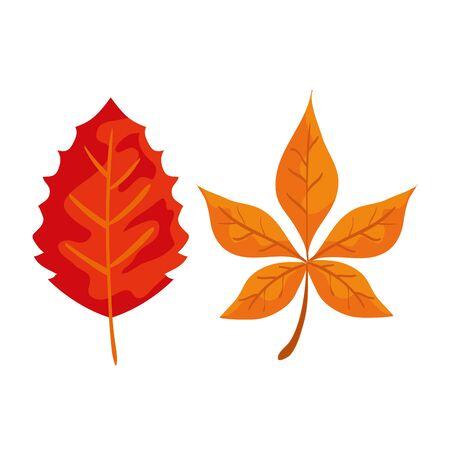 set of natureleaves plants to autumn season over white background, vector illustration Illustration