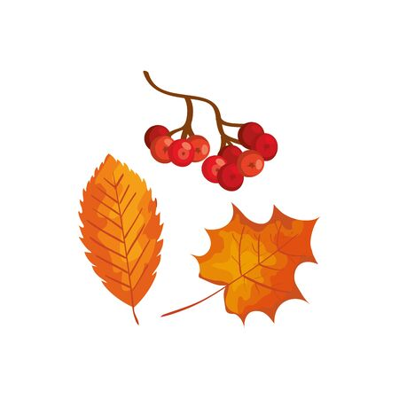 season autumn leafs with fruits isolated icon vector illustration design