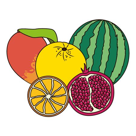 watermelon grapefruit orange and mango tropical  vector illustration