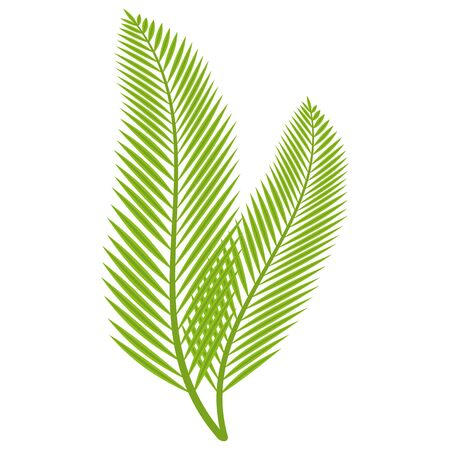 palm branch leaves on white background vector illustration 向量圖像