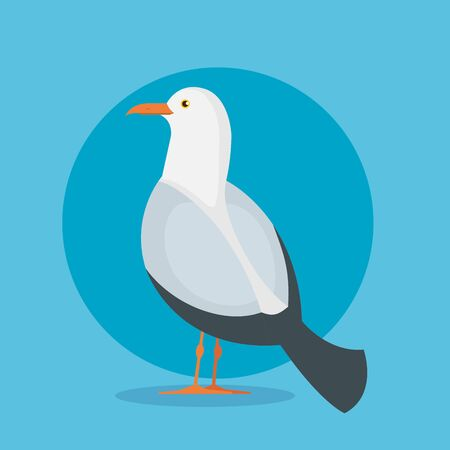 dove bird animal with wings and feathers over blue background vector illustration