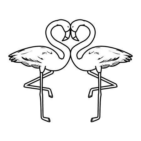 exotic flemish couple birds vector illustration design Ilustracja