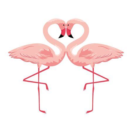 Oiseaux exotiques couple flamand vector illustration design