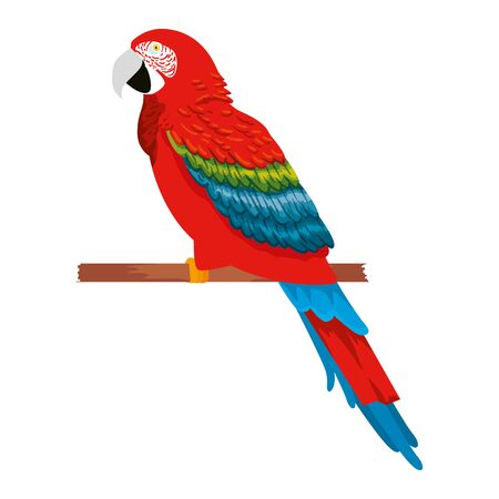 tropical and exotic parrot vector illustration design