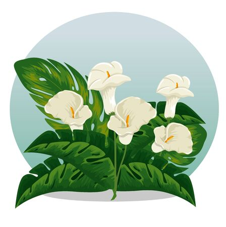 exotic flowers plants with natural leaves vector illustration