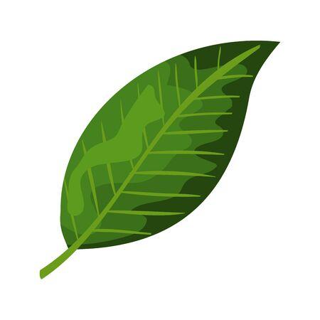 ecology leaf plant isolated icon vector illustration design  イラスト・ベクター素材