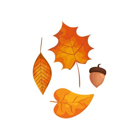 season autumn leafs with nut isolated icon vector illustration design