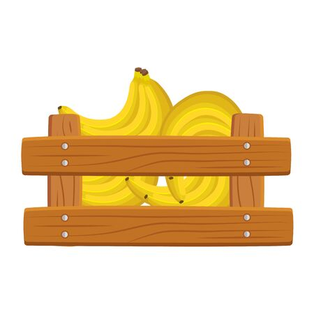 fresh bananas fruits in wooden box vector illustration design