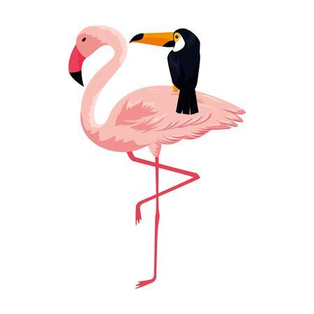 exotic flemish and toucan birds vector illustration design Иллюстрация