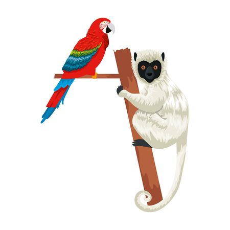tropical capuchin monkey and parrot vector illustration design
