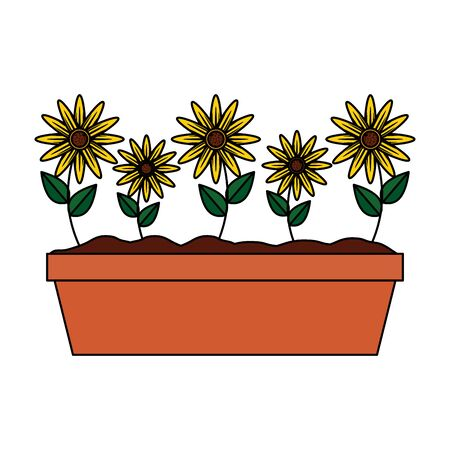 sunflowers in pot icon vector illustration design