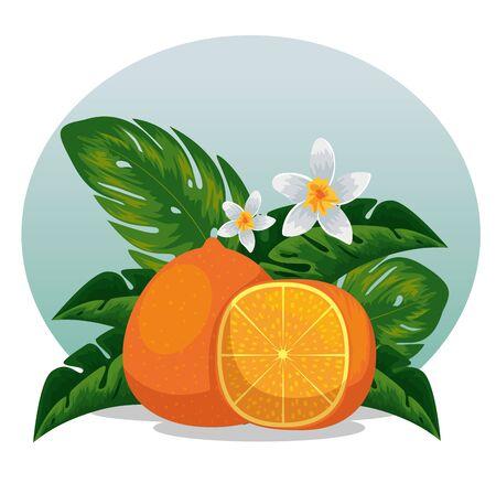 exotic orange fruit with exotic leaves vector illustration Reklamní fotografie - 133779275