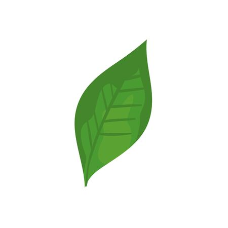 leaf nature ecology isolated icon vector illustration design 스톡 콘텐츠 - 134050107