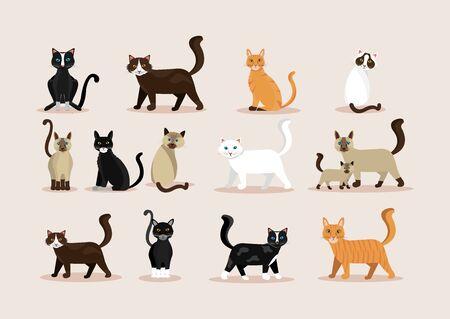 bundle of cats feline animals icons vector illustration design Illustration