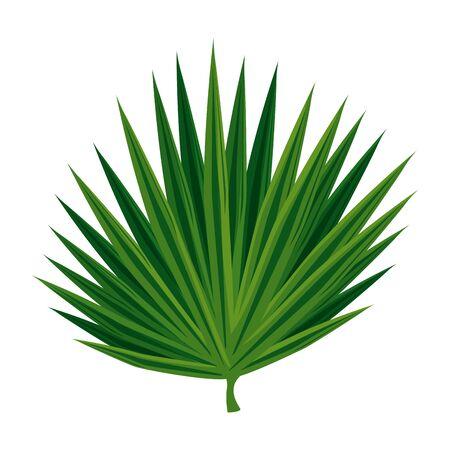 exotic leaf plant icon vector illustration design
