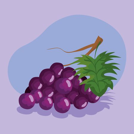Purple grapes design, Fruit healthy organic food sweet and nature theme Vector illustration Illustration