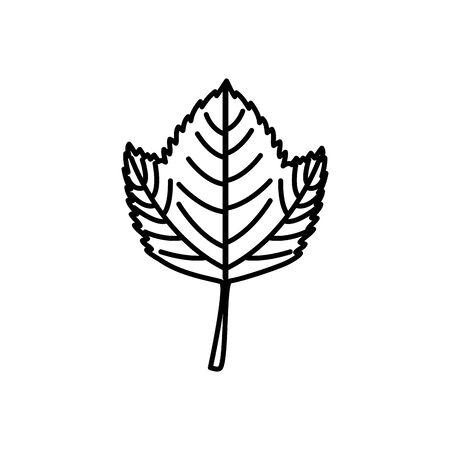 Autumn leaf design, season nature ornament garden decoration and botany theme Vector illustration Ilustrace