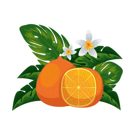 fresh tangerine half citrus fruit with tropical floral decoration vector illustration