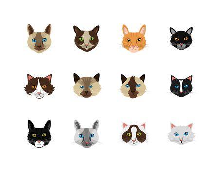 bundle faces of cats feline animals icons vector illustration design