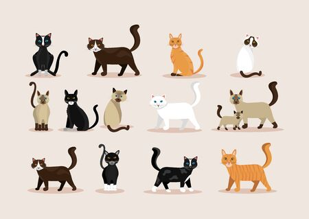 bundle of cats feline animals icons vector illustration design  イラスト・ベクター素材