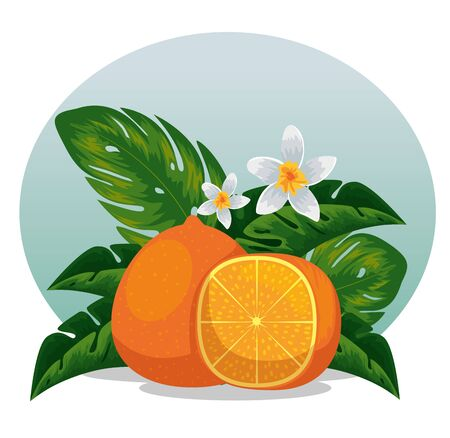 exotic orange fruit with exotic leaves vector illustration