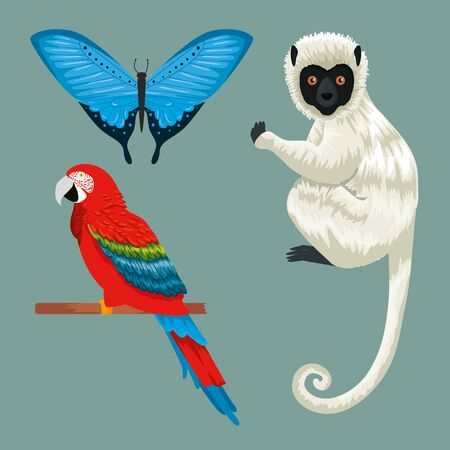 set tropical butterfly with parrot and lemur vector illustration