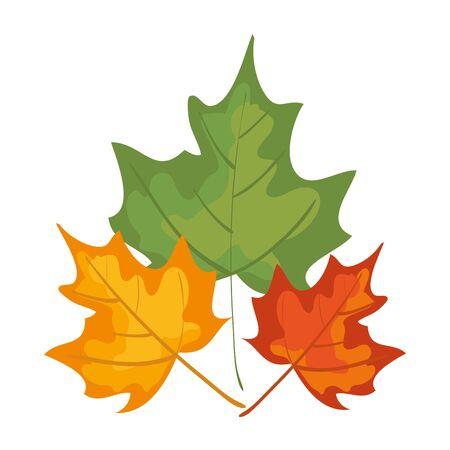autumn dry maple leafs nature decoration vector illustration design Banque d'images - 134812248