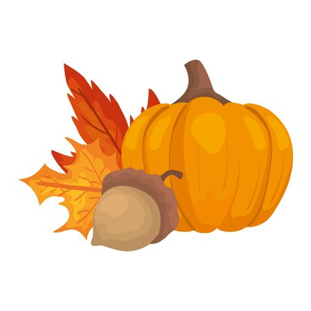 autumn pumpkin with nut and leafs vector illustration design