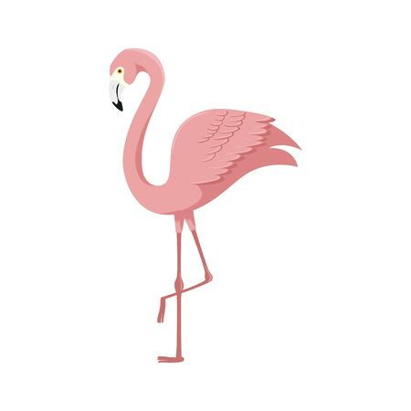 flamingo pink animal exotic isolated icon vector illustration design Ilustracja