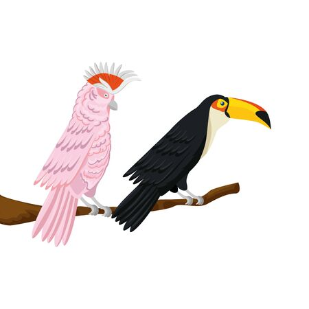 parrot pink with toucan on branch isolated icon vector illustration design Illustration